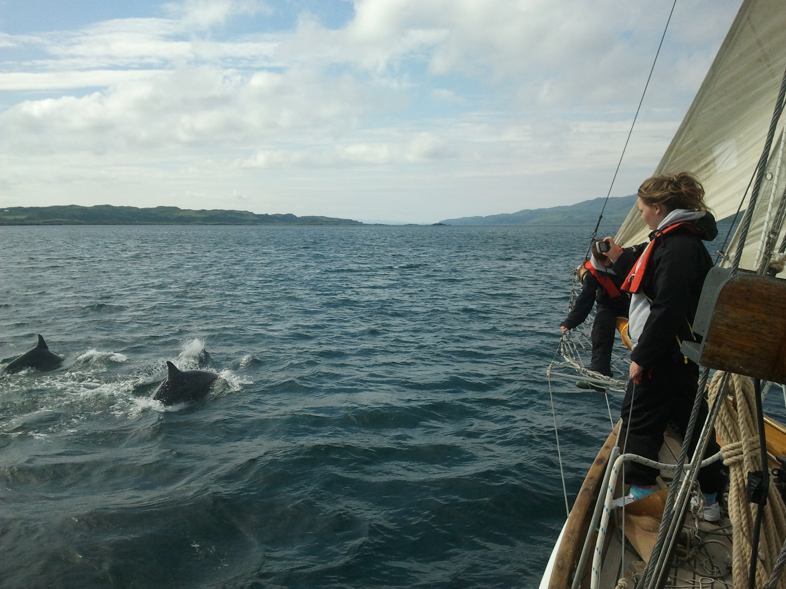 Dolphins escort Duet in the Lynn of Lorne